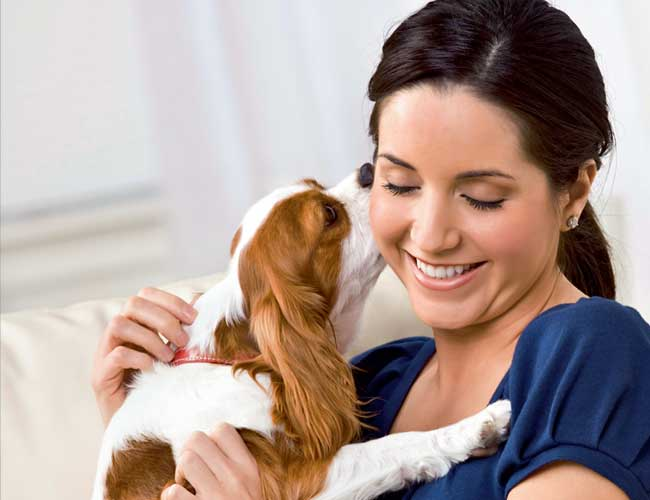 5 Care tips for handling your pet