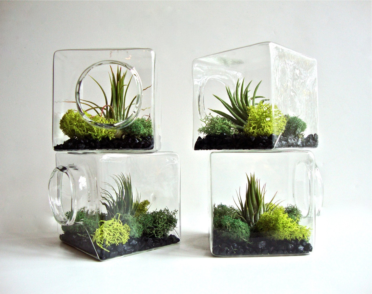 Terrariums Natural Habitat for your Niche!